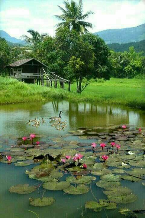 Pin By Sardar On Bengal Village Beautiful Landscape Photography Beautiful Landscapes Nature Photography