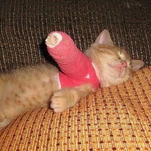 Awww.. cat cast
