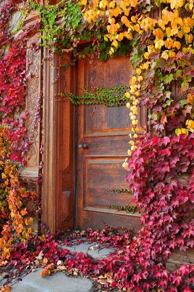 Beautiful climbing vines in autumn with red, yellow, orange and green. #fallinspiration #autumnbeauty