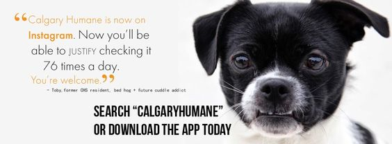 The Calgary Humane Society is now on Instagram! Follow them today! ;)