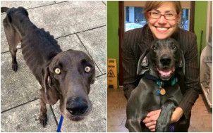 antes y después de un perro adoptado