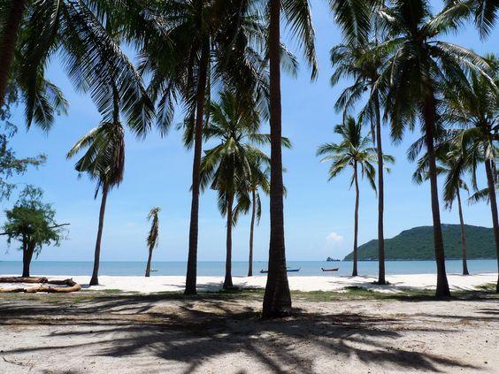 Coconuts on the beach.....Khao Sam Roi Yot National Park, Prachuap Khiri Khan, Thailand