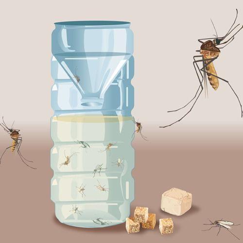 Epingle Sur Insectes