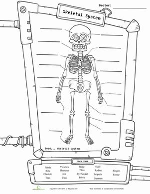 Skeleton Diagram | Science Worksheets, Skeletons and Worksheets
