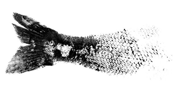 Gyotaku - is the traditional method of Japanese fish printing, dating from the mid-1800s. This form of nature printing may have been used by fishermen to record their catches, but has also become an artform on its own.