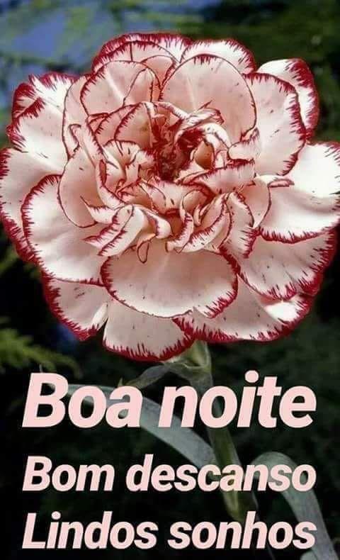 Boa Noite Com Imagens Flores Exoticas