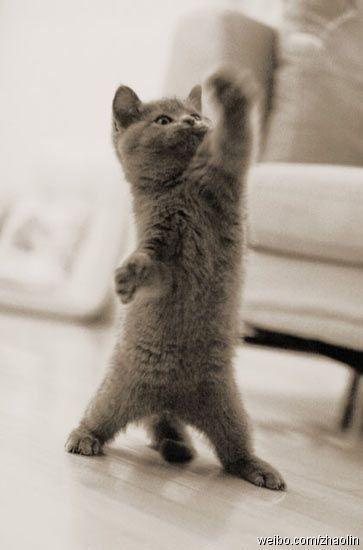 sé que las fotos de gatos están muy trilladas, pero...