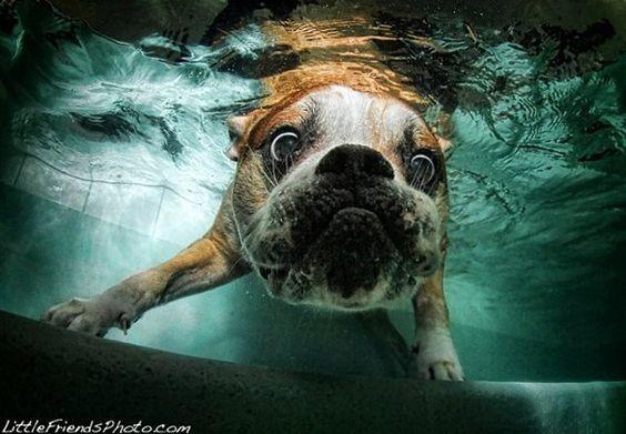 Hunde unter Wasser-das Fotobuch gibts im Handel zu kaufen.