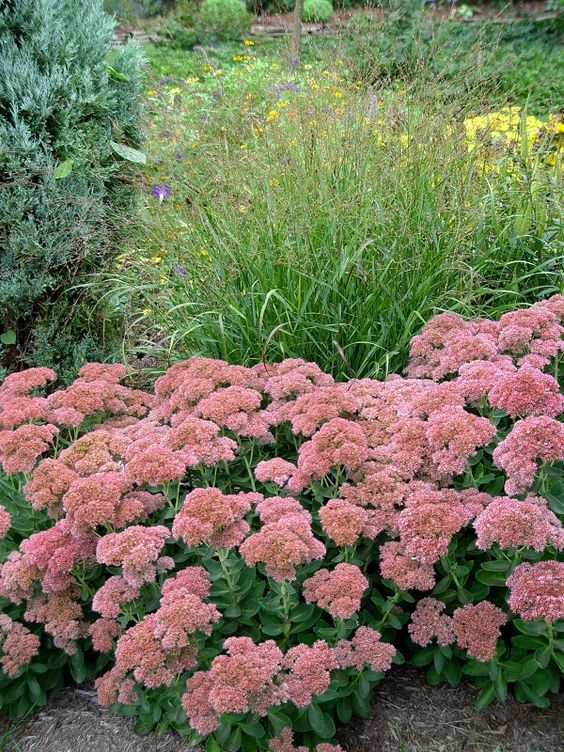You want Continues Color this Summer Plant these Perennials