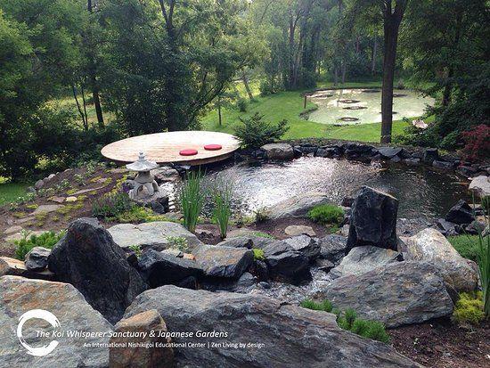 c4b365e475f142f920d65bb4c9d1455c - The Koi Whisperer Sanctuary & Japanese Gardens