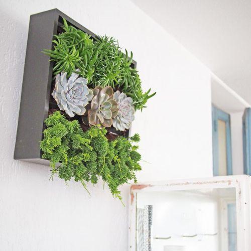Ontdek: D&M verticale plantenbak