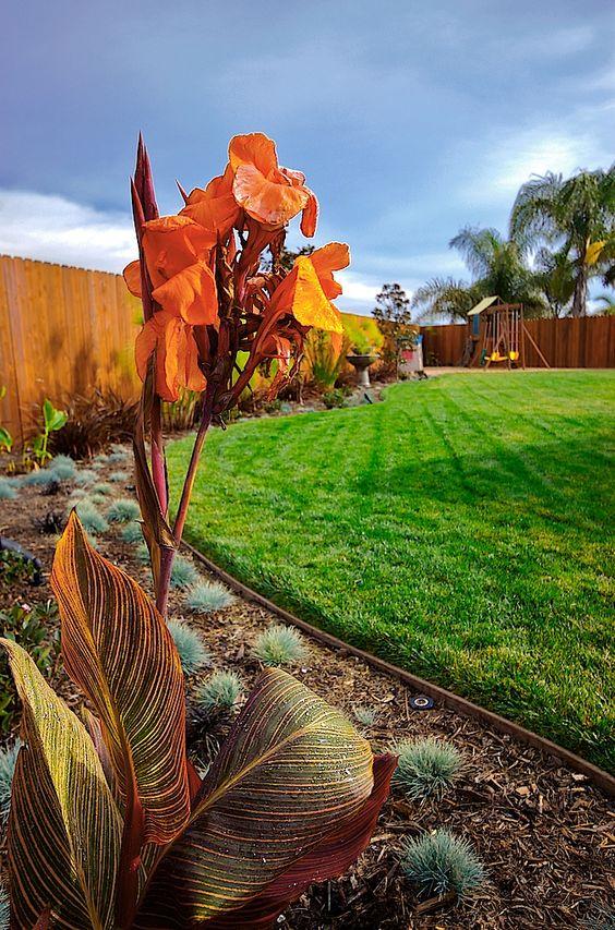 Ventura, California tropical landscape. Scarlett's Landscape, Inc. http://scarlettslandscaping.com/