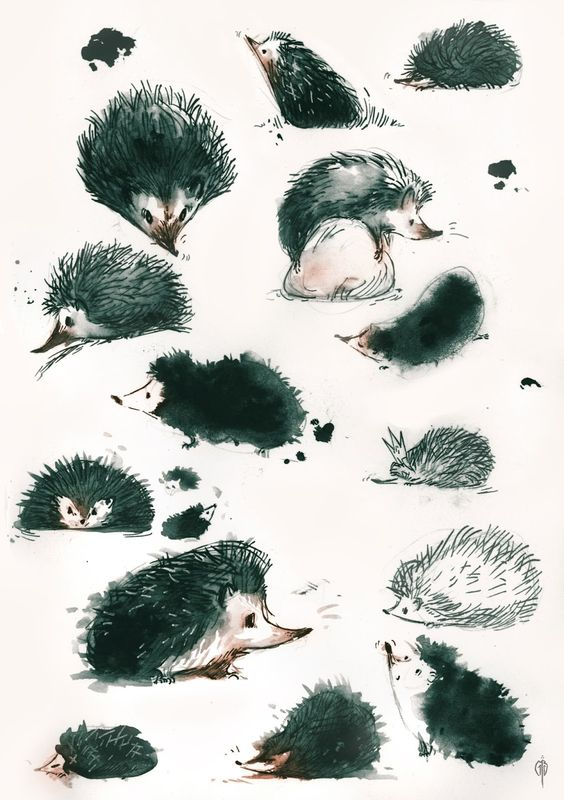 how to draw a hedgehog draw so cute