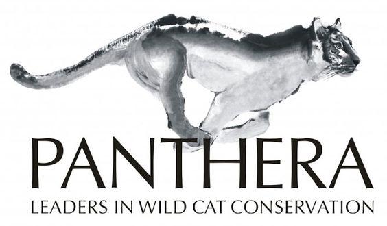 panthera organization - Pesquisa do Google