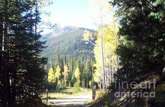 Title:  State Forest State Park   Artist:  Gloria Koch  Medium:  Photograph - Photograph