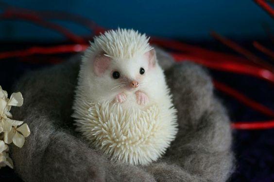 White Hedgehog