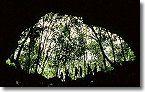 Rainforest Entry - Cave Tours at Undara Experience #ecotourism #Queensland #Australia