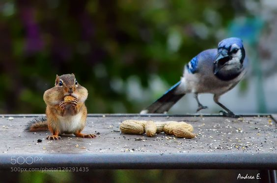 First come first serve -1 by andreae #animals #pets #fadighanemmd