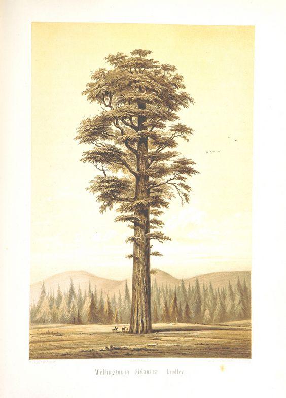 Image taken from page 539 of 'Tagebuch einer Reise vom Mississippi nach den Küsten der Südsee. ... Eingeführt von A. von Humboldt. Mit 13 Illustrationen, etc'   by The British Library