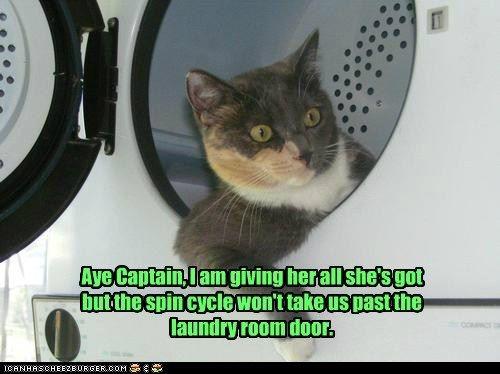 Trekkie Cat