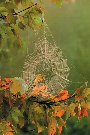 spider web in the fall with lovely fall colors