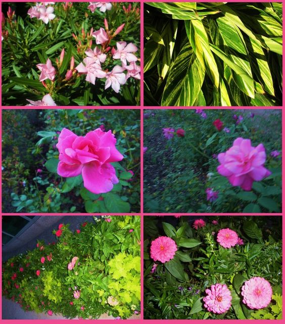 Flowers and Plants of Houston, Texas