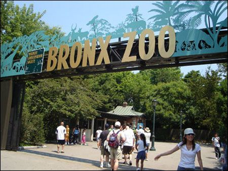 I never got to go when I lived in NYC. I love going to zoos.