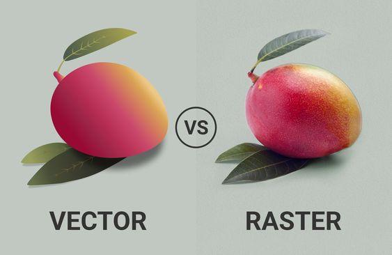 Tässä kuvassa näet eron rasteri ja vektorikuvan realistisuuden suhteen. Vasemmalla puolella on vektori versio mangosta, joka näyttää ihan piirretyltä. Oikealla puolella taas on kuva samasta mangosta mutta rasterina, jolloin kuva näyttää valokuvalta.