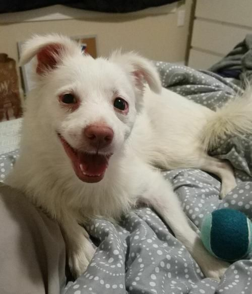 Adopt Chino Papuccino On Dog Adoption Kitten Adoption Pets