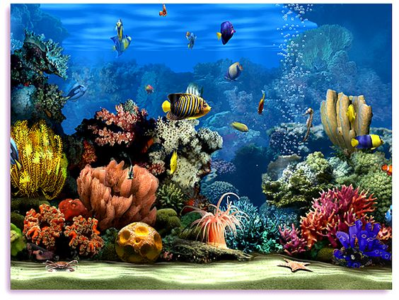 Animated fish aquarium screensaver free living marine for Live fish tank