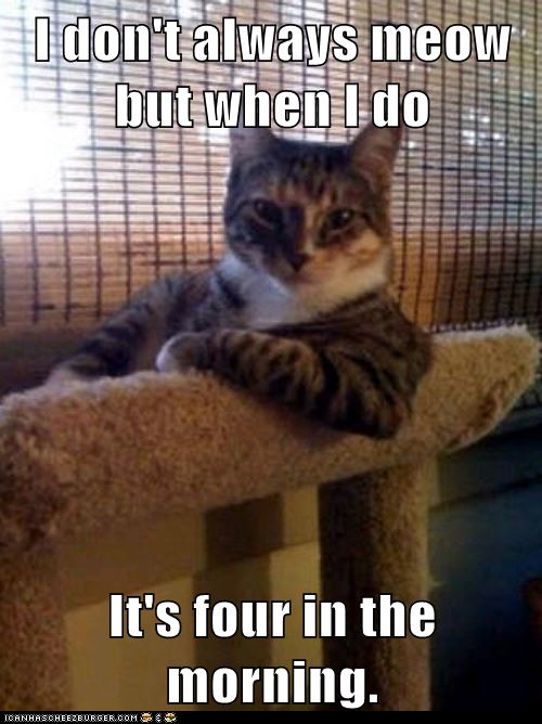 Totally describes my cat! If only this kitty were orange...