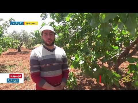 شجرة الفستق الحلبي طرق العناية والوقاية من الأمراض ريف حماة Youtube Rayban Wayfarer Mens Sunglasses Men