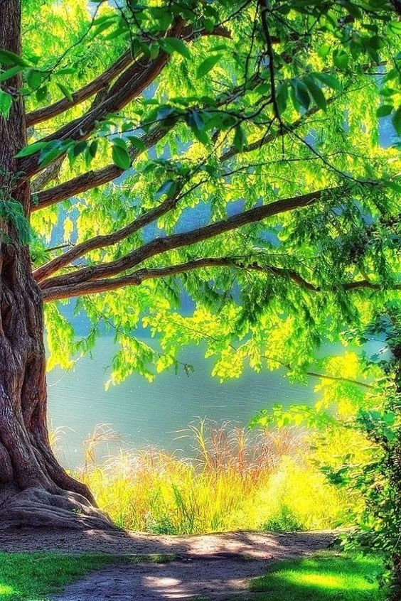 Pin On Citations Tree background hd full screen