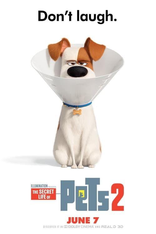 Download The Secret Life Of Pets 2 full movie Hd1080p Sub English Thesecretlifeofpets2 Fullmovie Fullmovieonl Secret Life Of Pets Secret Life The Secret