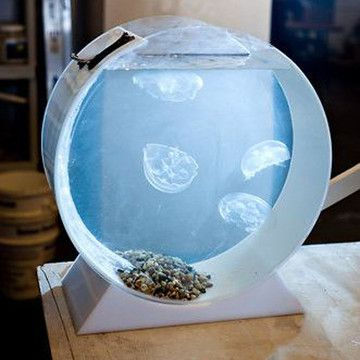 best ideas about jellyfish bowl pet jellyfish and desktop. Black Bedroom Furniture Sets. Home Design Ideas