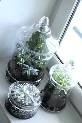 terrarium terrarium de cactus and cactus on pinterest. Black Bedroom Furniture Sets. Home Design Ideas