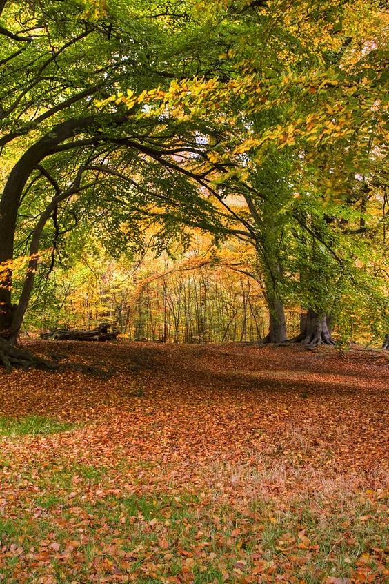 ✮ Epping Forest - Essex, UK