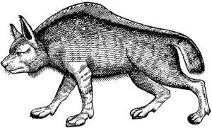 Wolfburn-wolf
