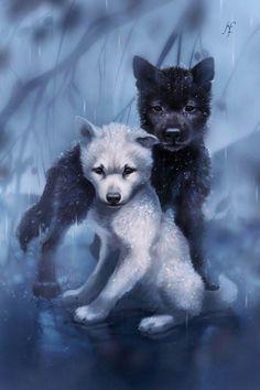 Alpha Wolf Wolf Art Beautiful Wolves Wolf Wallpaper