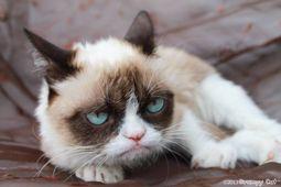Grumpy Cat photo #GrumpyCat