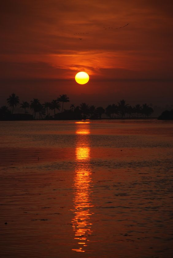 woken every morning by Kerala rice boat crew to see the amazing sunrise!