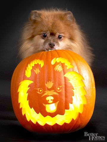 Better late then never..This little guy is pretty talented and pumpkin carving. Don't you agree?