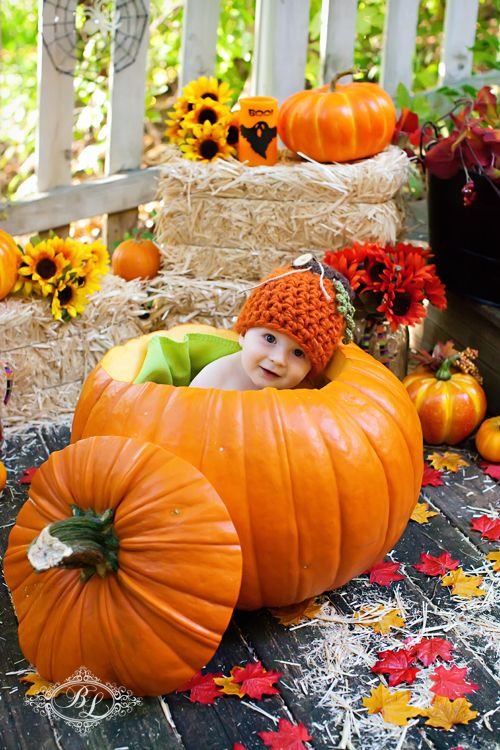 how many babies do you think get put in pumpkins each halloween cute newborn photography pinterest babies autumn and photo shoots - Baby Halloween Pictures