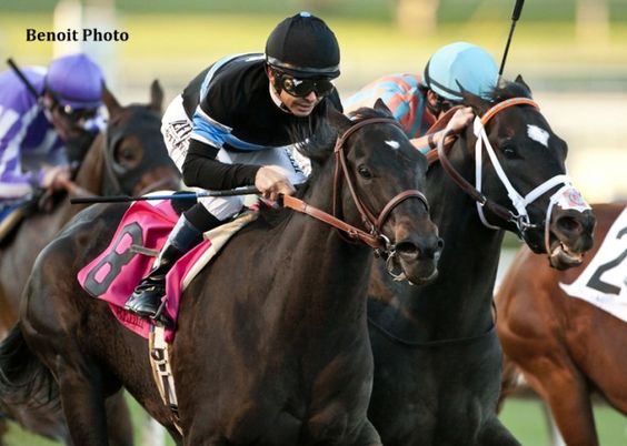 Shared Belief rallies to win the G1 Malibu. Odds-on favorite Shared Belief added another Grade 1 victory to his resume with a score in the Grade 1, $300,000 Malibu Stakes at Santa Anita Friday.