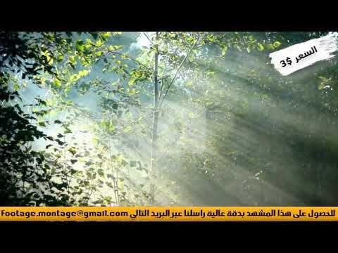 مشهد غاية في الجمال لاشعة الشمس تتخلل الغابة لأعمال المونتاج 1414732 Ole