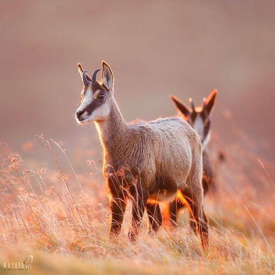 Stunning Capture Animals Morning Light Beautiful Creatures