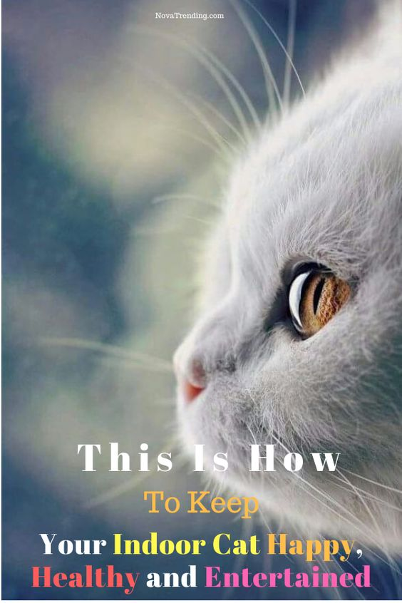 This Is How To Keep Your Indoor Cat Happy Healthy And Entertained Cat Training Cat Training Kittens Indoor Cat