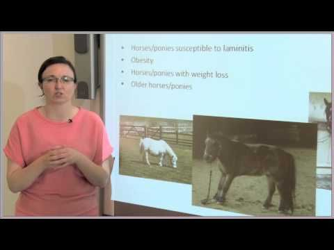 Equine Nutrition with Jo-Anne Murray http://www.coursera.org/course