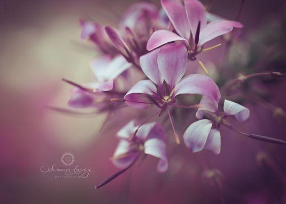 All Things Purple   All things purple - 8x8 Fine Art Print - Purple Bloomed Flower ...