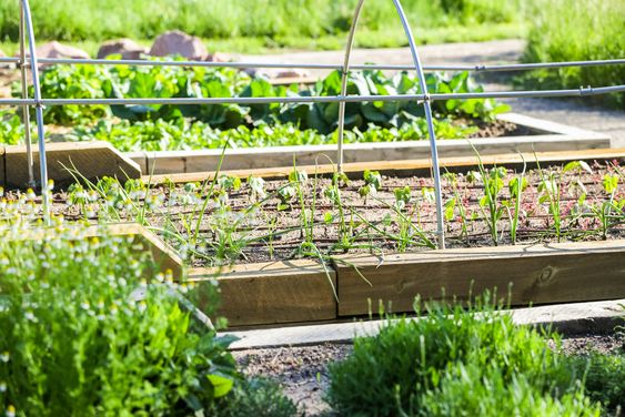 What Is a Community Garden – Benefits & How to Start Your Own